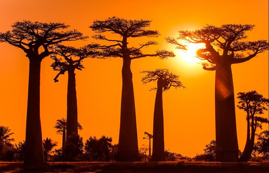 Солнечные истории Мадагаскара