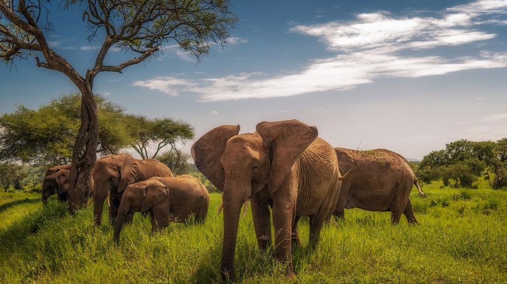 Групповое сафари: Тарангире, Нгоронгоро и Серенгети