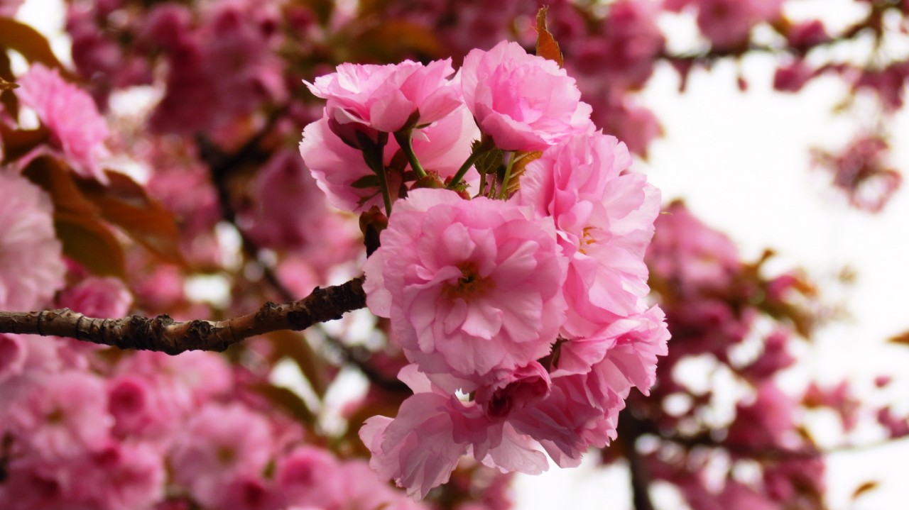 Теплый уикенд – Закарпатье + Будапешт на цветение сакуры!