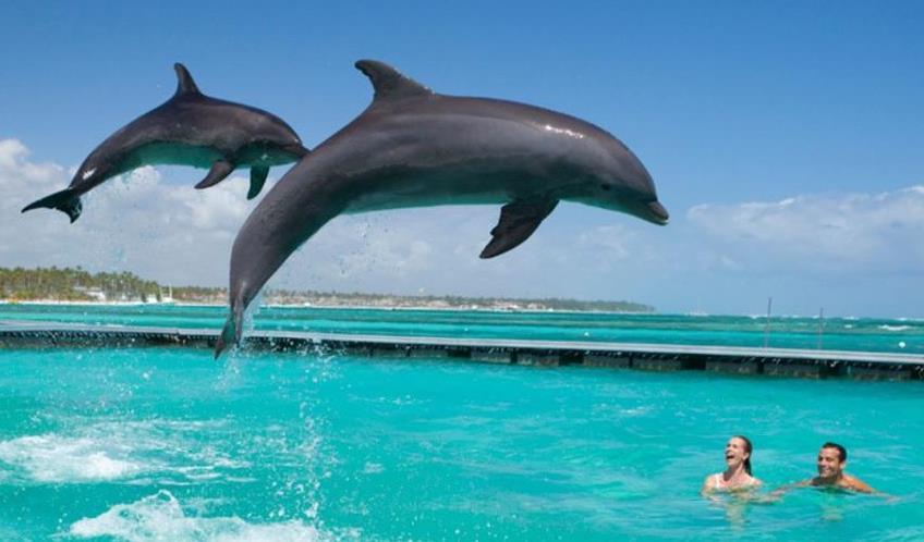 Фантастическая прогулка с дельфинами на о. Маврикий