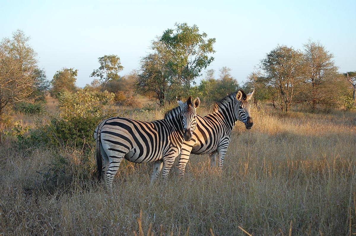 На недельку в ЮАР: путешествие по Южной Африке + Панорамный маршрут