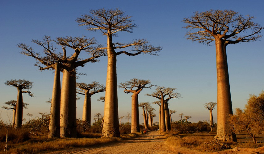 Южный Мадагаскар