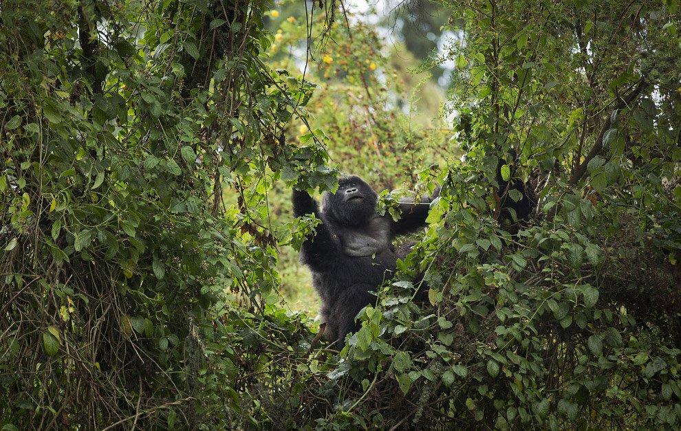 Путешествие по Уганде, Руанде и Конго c Туроператором «Калипсо Украина»