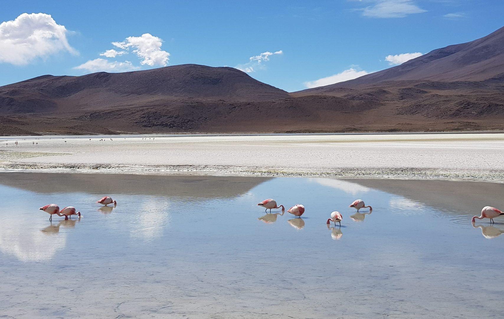 Ла Пас, Солончаки Уюни и Лагуны Боливии + озеро Титикака