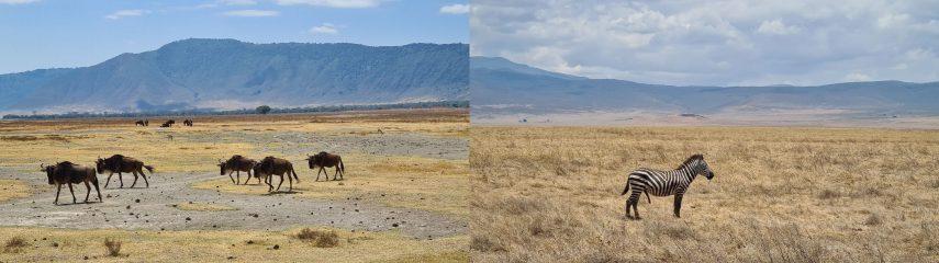 Отдых на Занзибаре и сафари по лучшим Национальным паркам Танзании