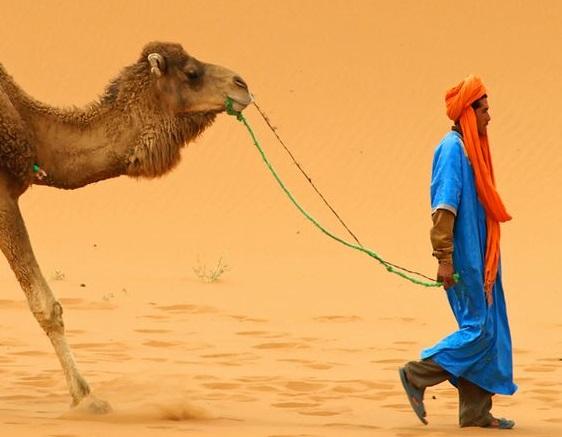 Увесь Туніс в одному турі. Екскурсії та відпочинок на узбережжі від 555 дол з перельотом!