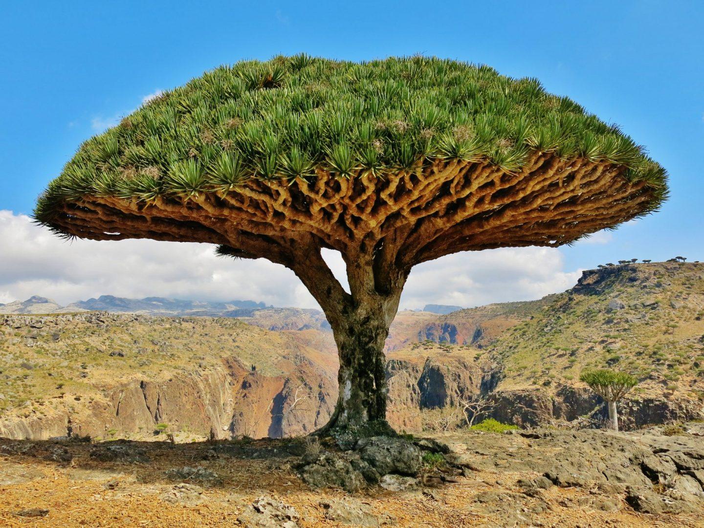 Остров Сокотра (Йемен) с туроператором Калипсо Украина
