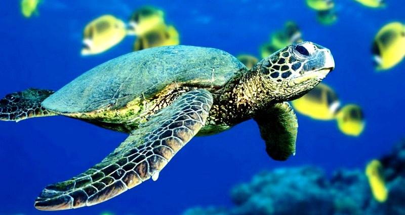 Черепахи, ламантины и киты – тур в Коста-Рику и Панаму