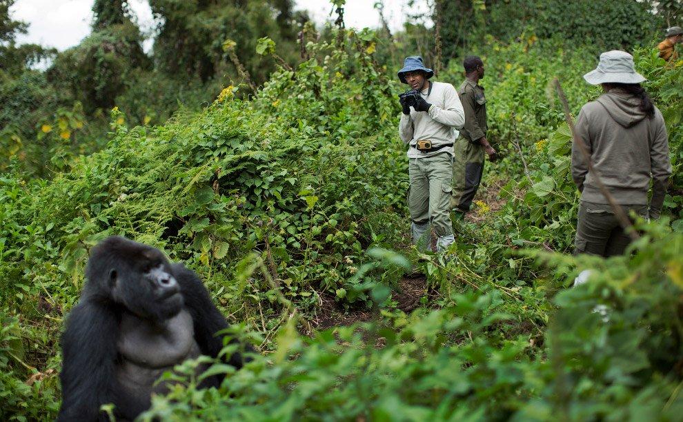 Восьмидневный тур по Уганде и Руанде 2020