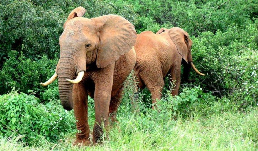Майские в Африке: путешествие по Уганде, Кении, Танзании и отдых на Занзибаре