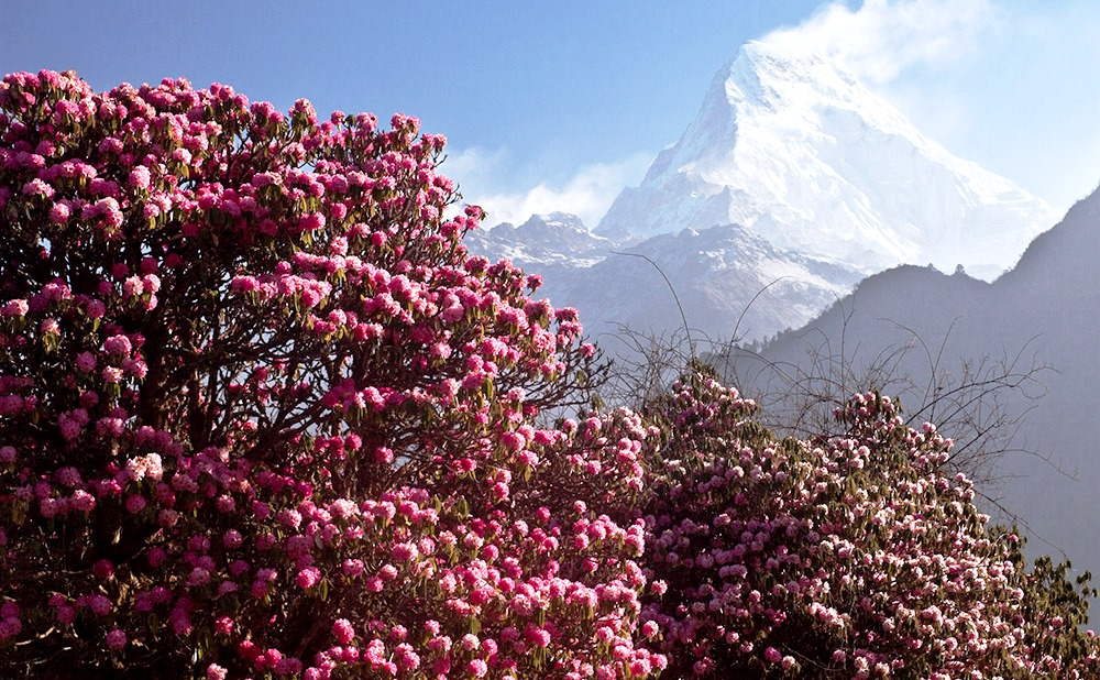 Страна дракона и фестиваль рододендронов! Непал+Бутан