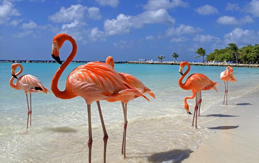 Отдых в Доминиканской республике  – прямой авиаперелет в стоимости – питание All inclusive от 1312 у.е с чел