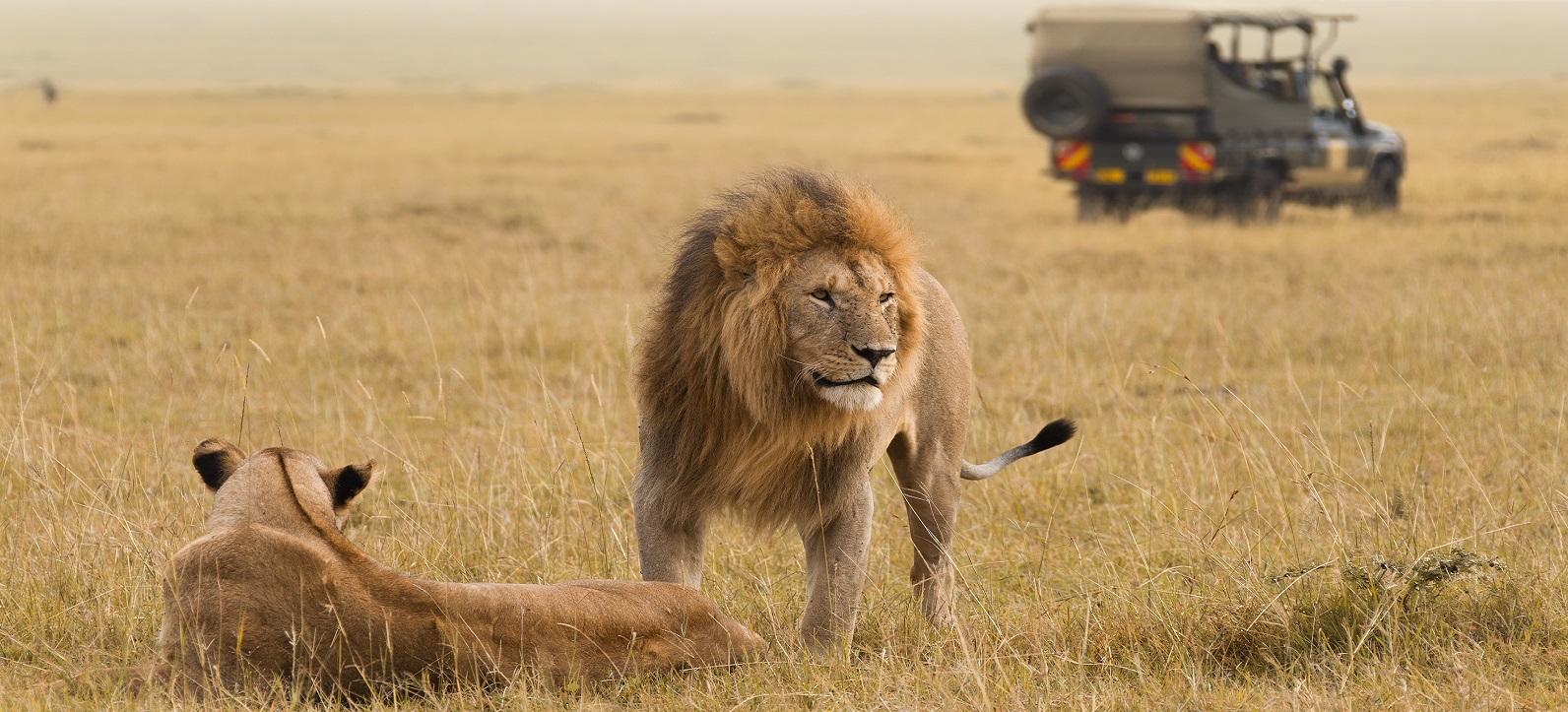 Гранд сафари в Кении