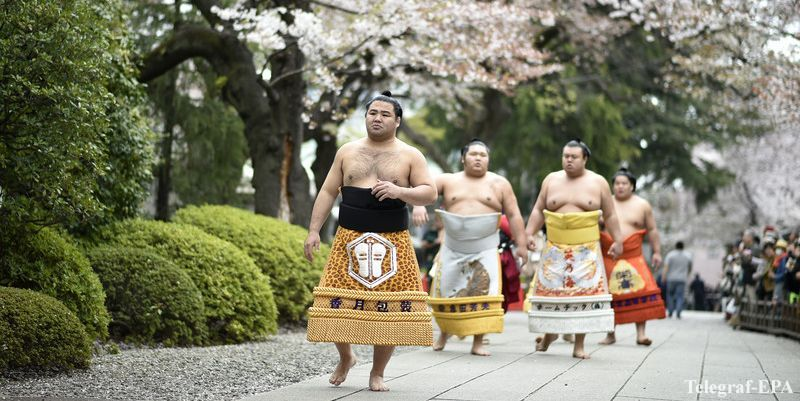 Неделя в Японии c посещением турнира сумо