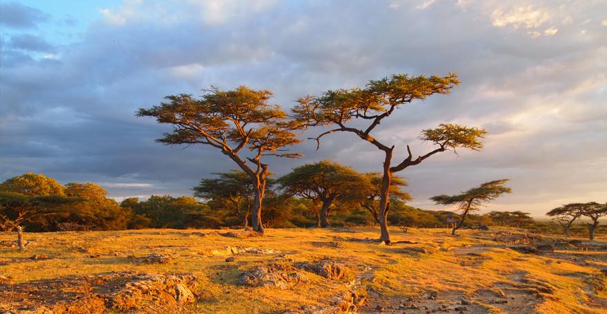 Пустыня Данакиль и племена долины Омо