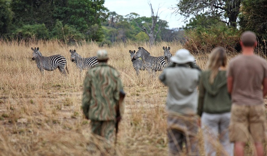 Эксклюзивное сафари Замбия-Малави
