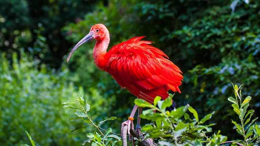 Тур в Суринам и Гайана – Природные богатства