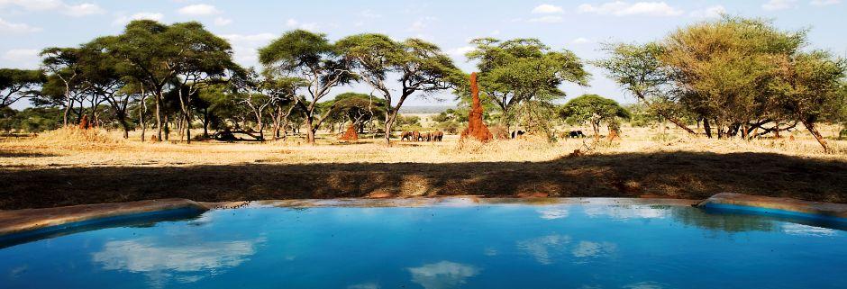 Групповое сафари: Тарангире + Озеро Маньяра + Нгоронгоро — 5 дней