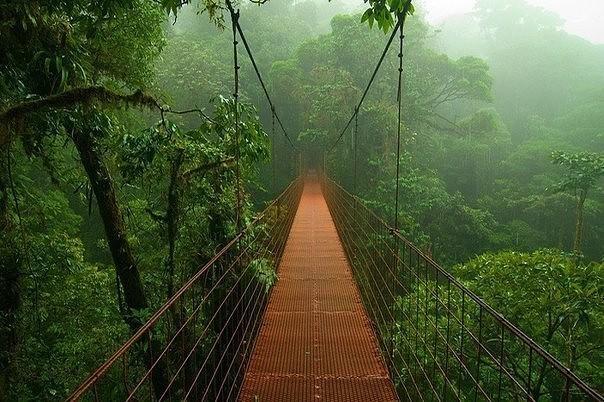 Тропический лес и горячие источники Термалес