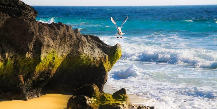 Острова Персидского залива – посещение о.Кешм и о.Киш