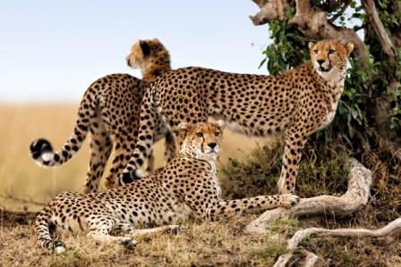 Путешествие по Кении с севера на юг