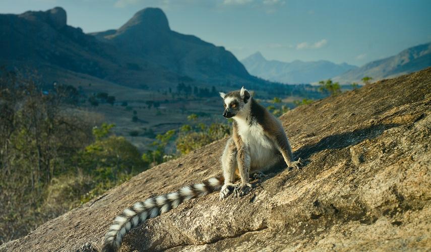 Западный Мадагаскар