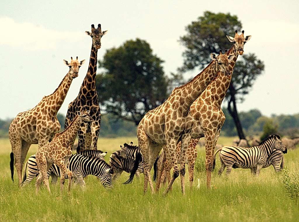 Путешествие по Южной Африке + Панорамный маршрут: мини-тур