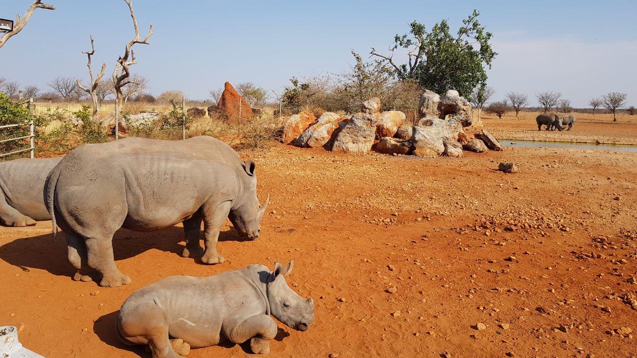 Путешествие по Южной Африке + Парк Чобе в Ботсване