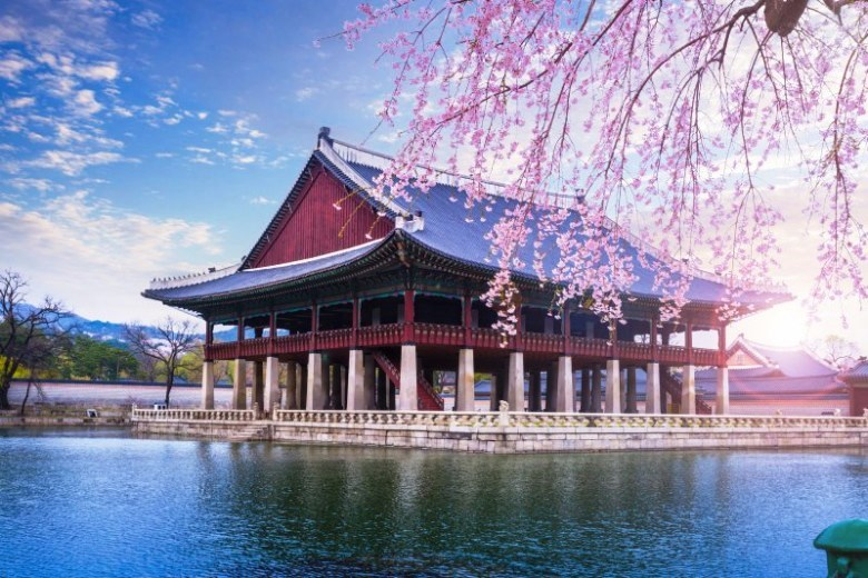 Сезон цветения сакуры в Сеуле и Пусане